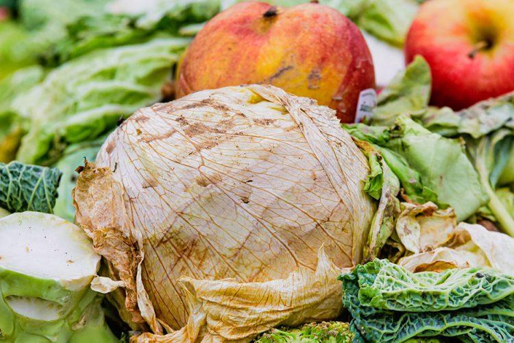Streit um die Tonne – im Kampf gegen Lebensmittelverschwendung