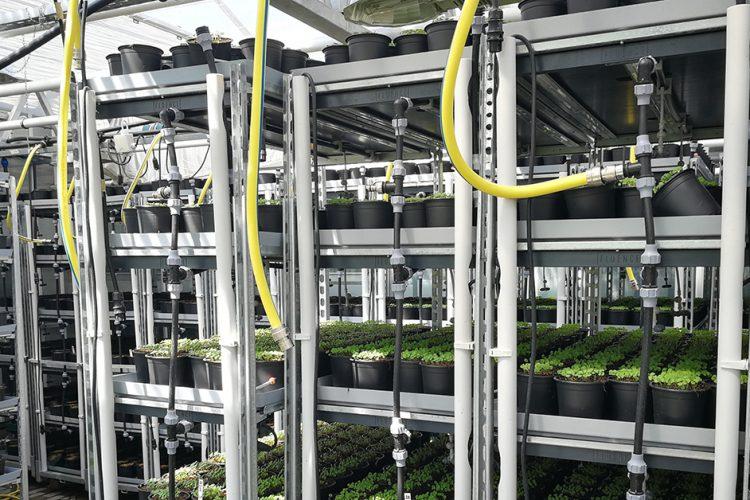 Hier ist die Zukunft Gegenwart: Die grüne Fisch-Basilikum-Fabrik