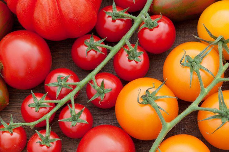 Lieblingsgemüse der Deutschen: Auf dem Weg zur optimalen Tomate