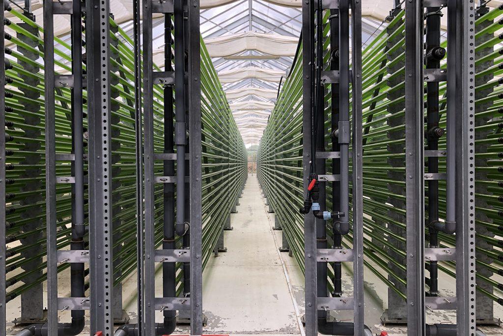 Algenfarm in Klötze