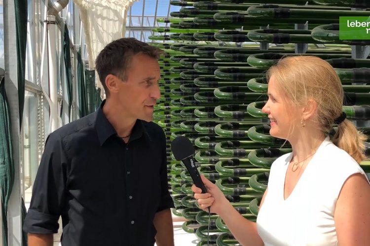 Wie sieht es auf einer Algenfarm aus? Ein Besuch vor Ort (Video)