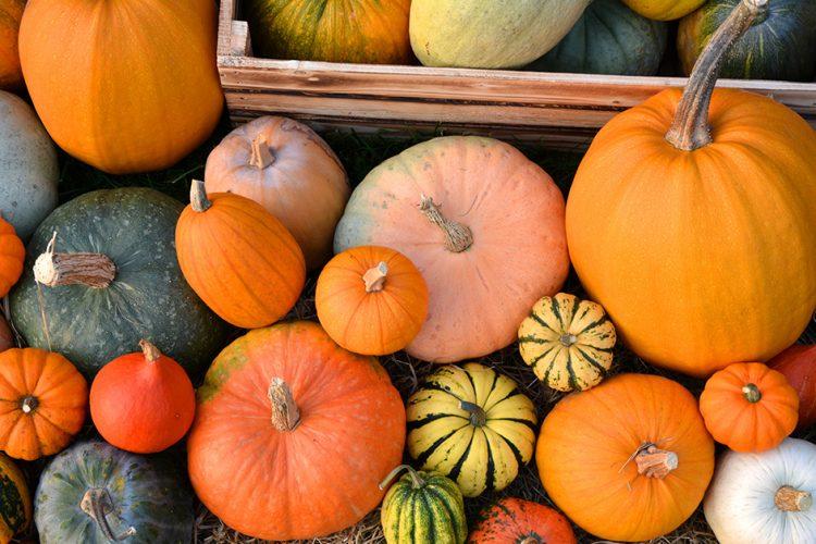 Nicht nur zu Halloween: Herbstgemüse Kürbis