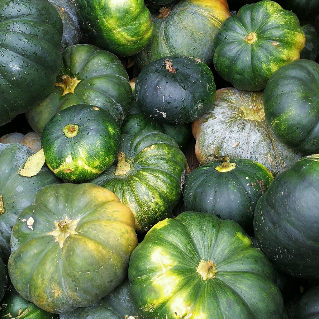 Muskatkürbis: Farbe wie eine Zucchini, die übrigens eine Unterart des Gartenkürbis ist
