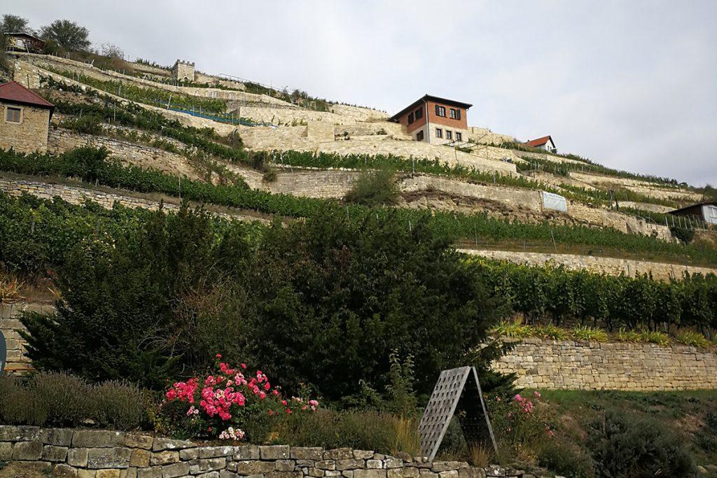 Weinhänge in der Saale-Unstrut-Region