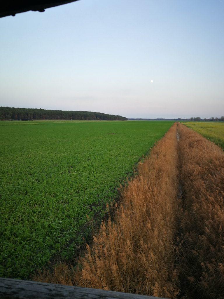 Blick aus dem Hochsitz übers Feld