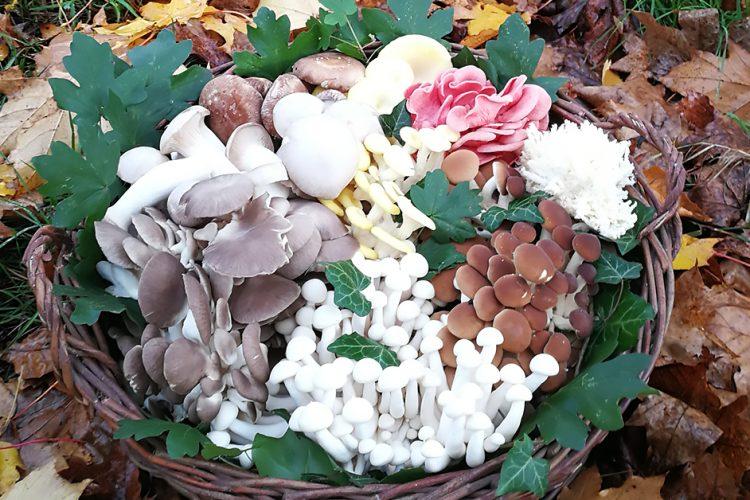 Mit und ohne Hut: Ein Korb voller Pilze