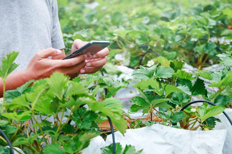 Blockchain für Lebensmittel: Freie Sicht auf Lieferketten?