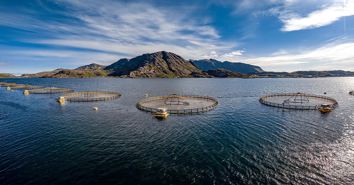 Lachsfarm in Norwegen
