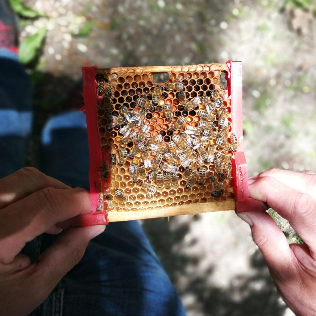 Dr. Benedikt Polaczek zeigt seine Honigbienen