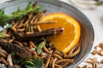 Teller mit Speiseinsekten: Mehlwürmer, Hausgrillen und Heuschrecken.