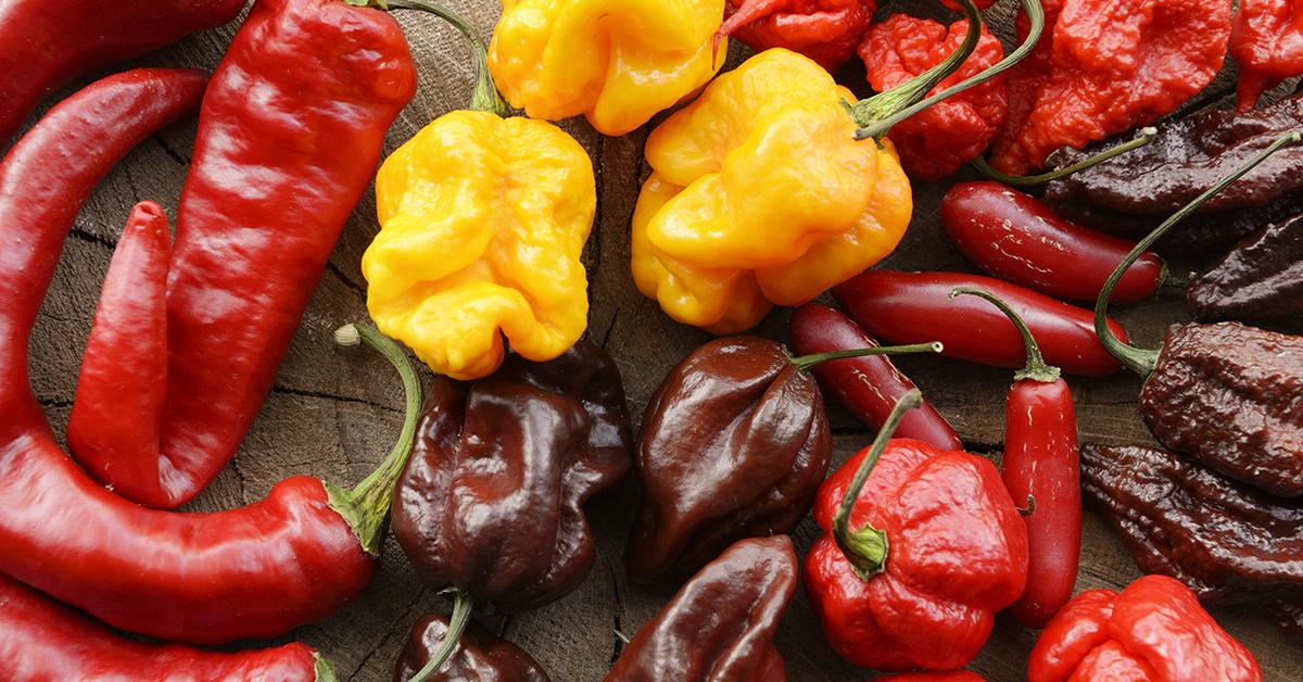 Chili (Capsicum) gibt es in den verschiedensten Farben und Formen - und Schärfen