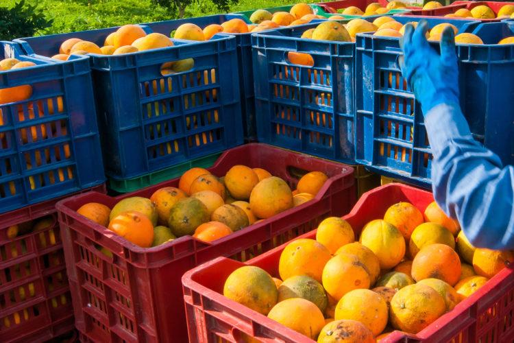 Zitrusfrüchte: Wenn das Leben Zitronen gibt …